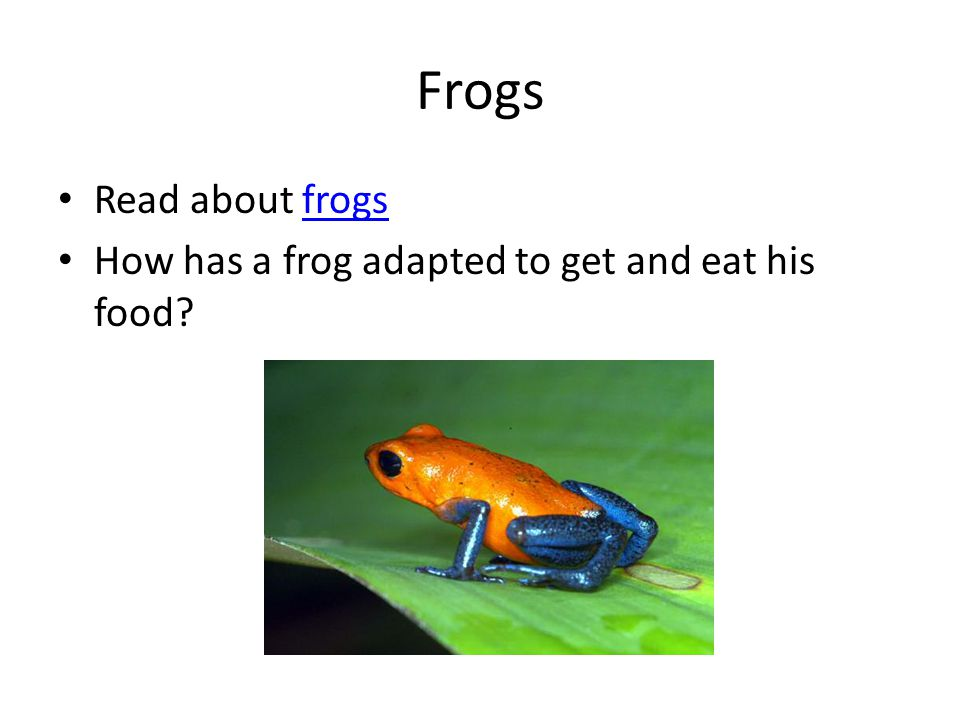 Frogs Read about frogsfrogs How has a frog adapted to get and eat his food