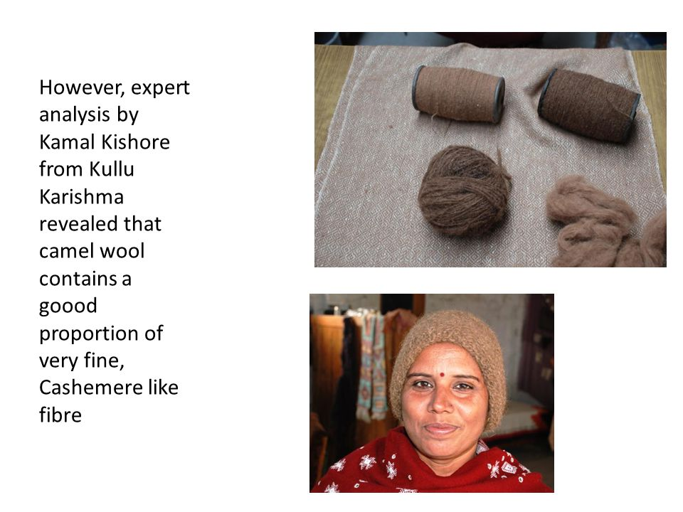 However, expert analysis by Kamal Kishore from Kullu Karishma revealed that camel wool contains a goood proportion of very fine, Cashemere like fibre