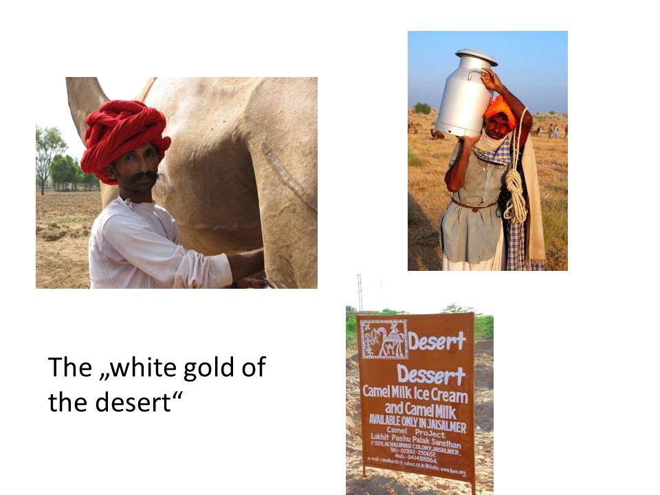 """The """"white gold of the desert"""