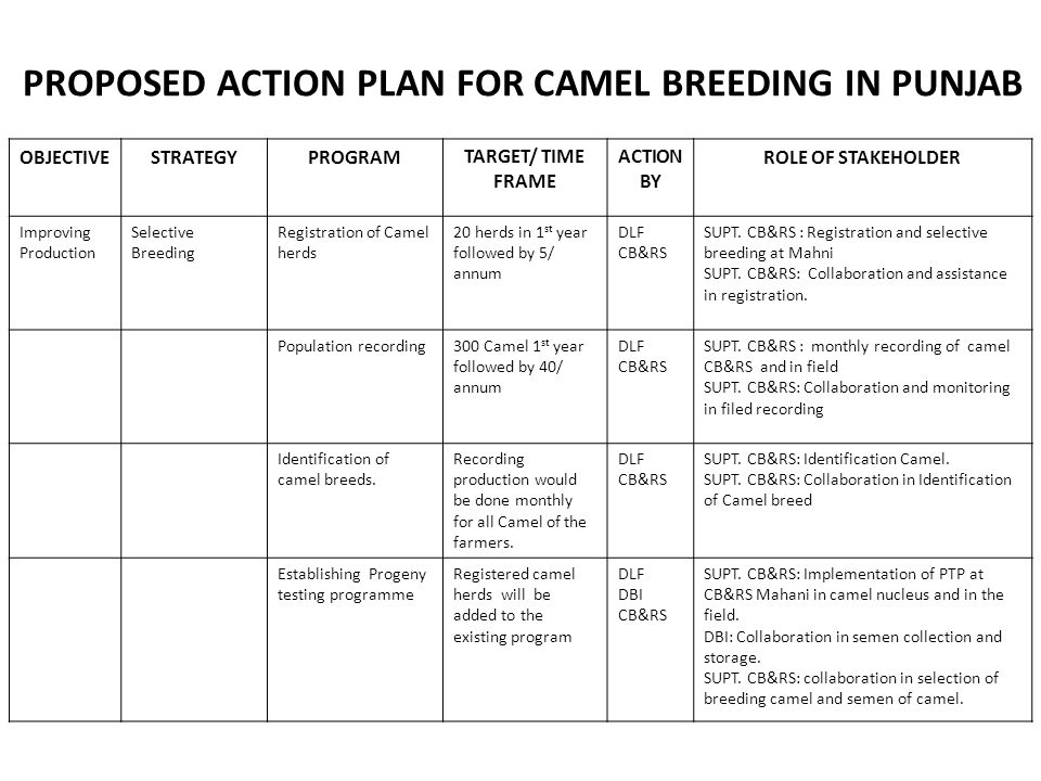 PROPOSED ACTION PLAN FOR CAMEL BREEDING IN PUNJAB OBJECTIVESTRATEGYPROGRAMTARGET/ TIME FRAME ACTION BY ROLE OF STAKEHOLDER Improving Production Selective Breeding Registration of Camel herds 20 herds in 1 st year followed by 5/ annum DLF CB&RS SUPT.