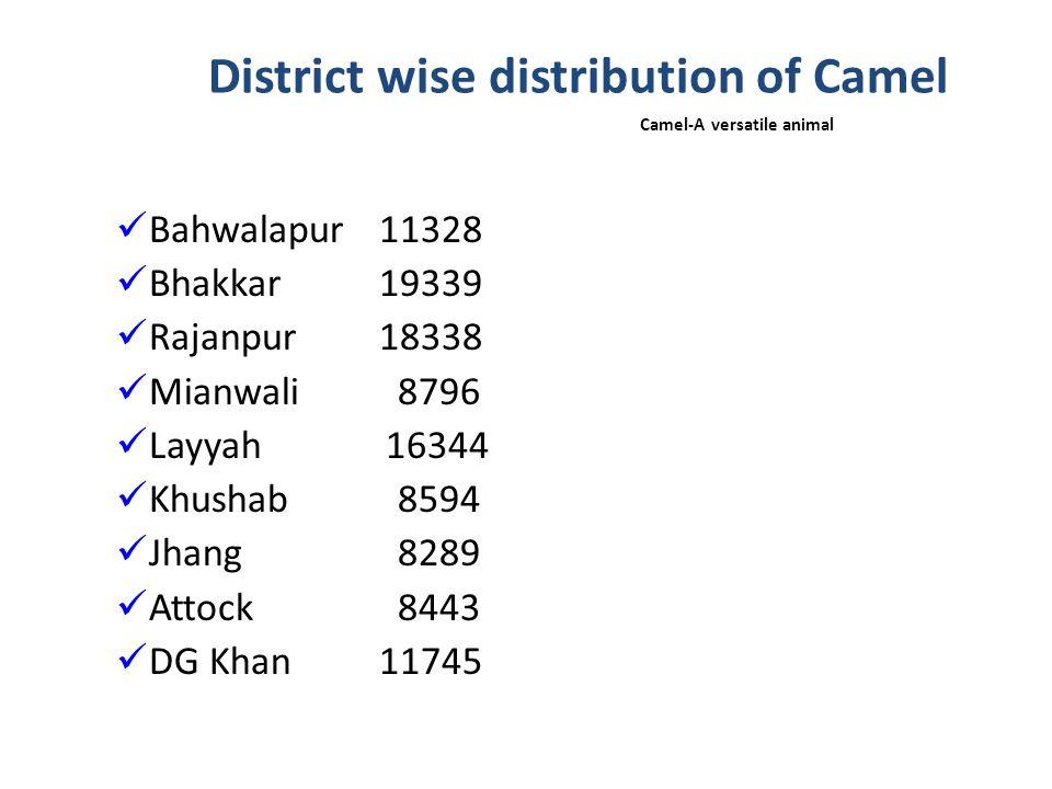 Major breeds of Camel in Punjab Milk- Barella Dual- Marrecha