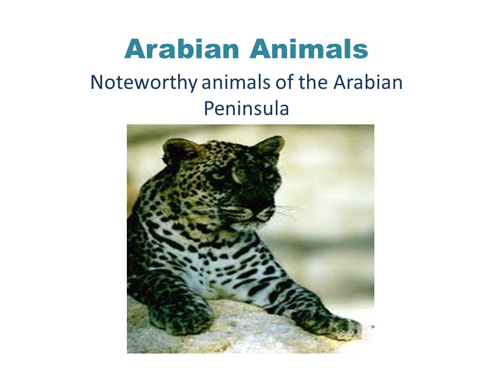 Arabian Animals Noteworthy animals of the Arabian Peninsula