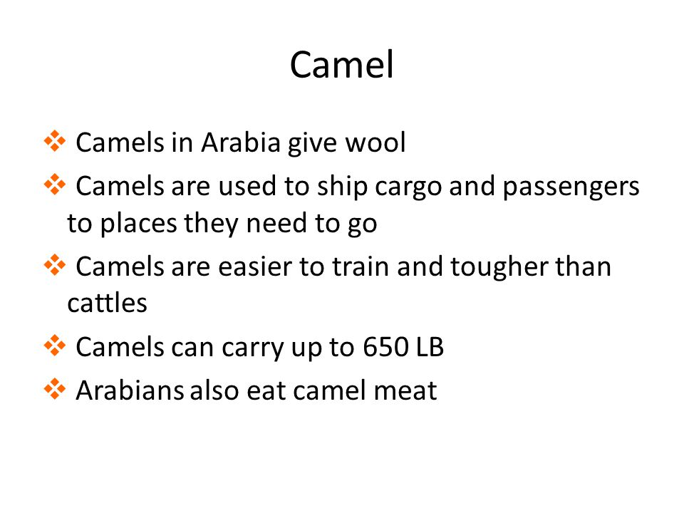 Camel  Camels in Arabia give wool  Camels are used to ship cargo and passengers to places they need to go  Camels are easier to train and tougher than cattles  Camels can carry up to 650 LB  Arabians also eat camel meat
