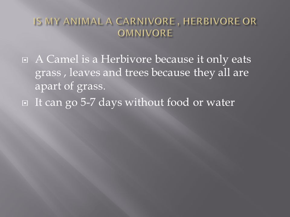 A Camel is a Herbivore because it only eats grass, leaves and trees because they all are apart of grass.  It can go 5-7 days without food or water