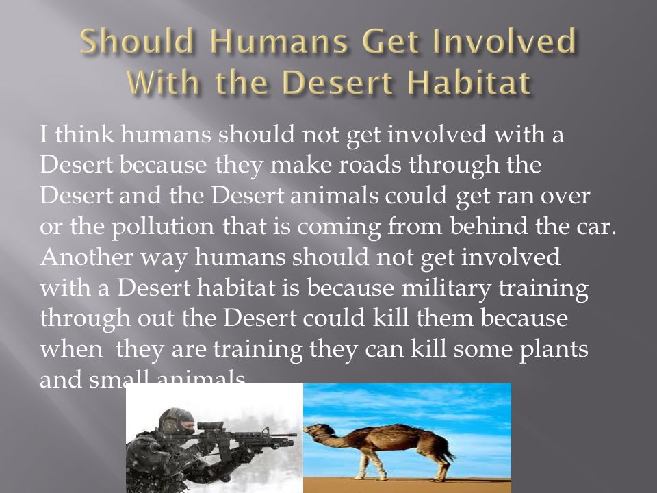 I think humans should not get involved with a Desert because they make roads through the Desert and the Desert animals could get ran over or the pollu
