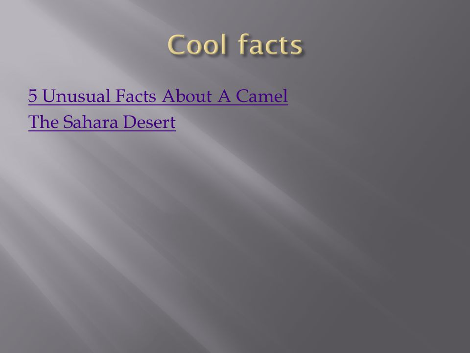 5 Unusual Facts About A Camel The Sahara Desert