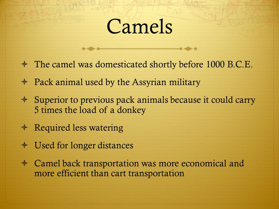 Camels  The camel was domesticated shortly before 1000 B.C.E.  Pack animal used by the Assyrian military  Superior to previous pack animals because