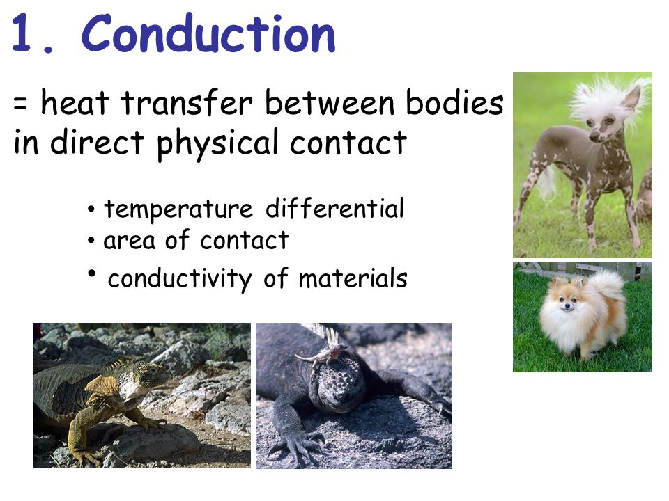 1. Conduction = heat transfer between bodies in direct physical contact temperature differential area of contact conductivity of materials