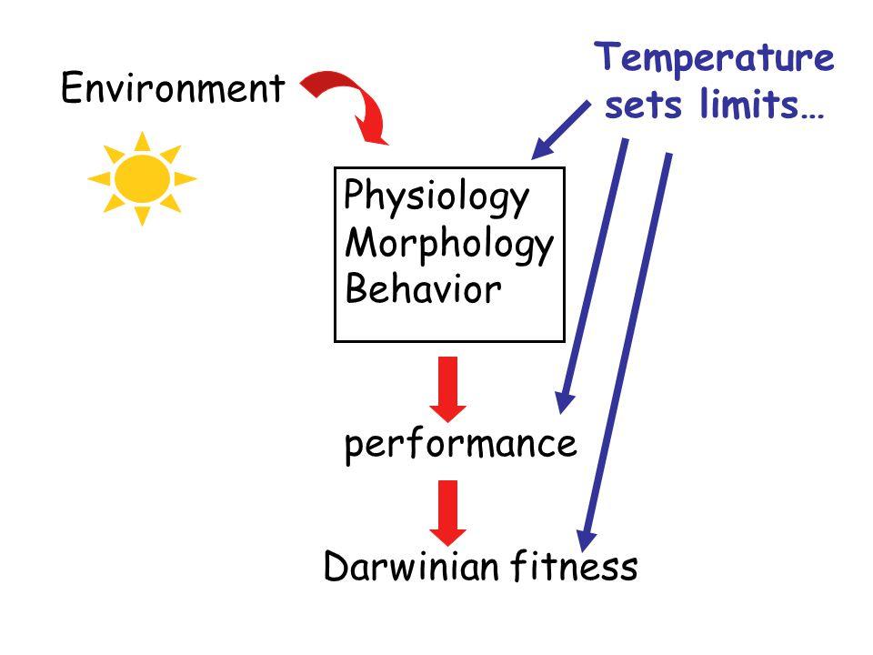 Environment Physiology Morphology Behavior Temperature sets limits… performanceDarwinian fitness