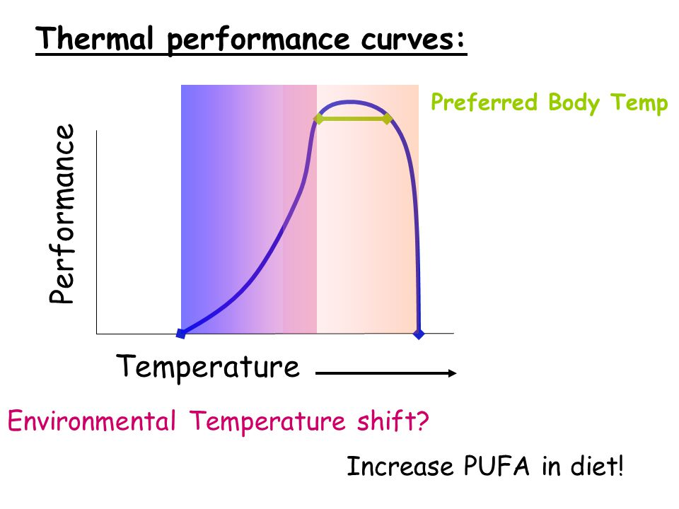 Temperature Performance Thermal performance curves: Preferred Body Temp Environmental Temperature shift? Increase PUFA in diet!