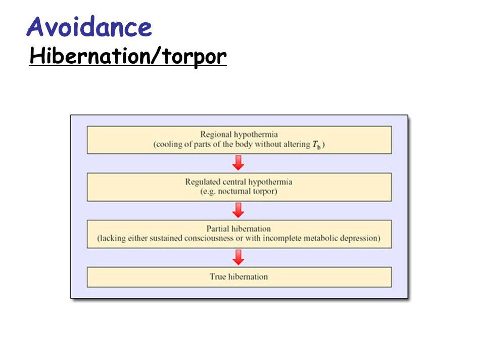 Avoidance Hibernation/torpor