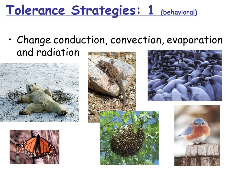 Change conduction, convection, evaporation and radiation Tolerance Strategies: 1 (behavioral)