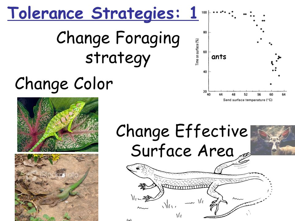 Change Color Change Foraging strategy Change Effective Surface Area ants Tolerance Strategies: 1