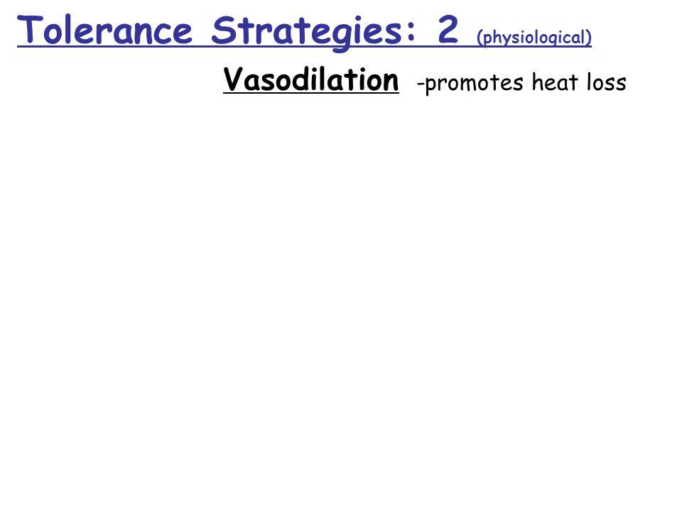 Tolerance Strategies: 2 (physiological) Vasodilation -promotes heat loss