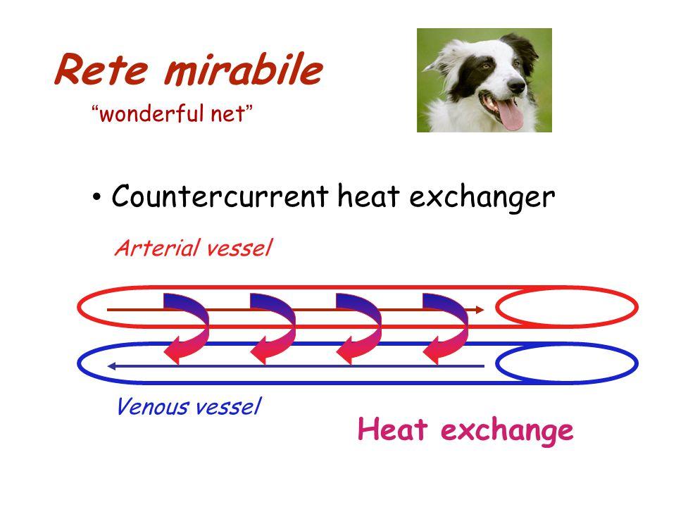 Rete mirabile Countercurrent heat exchanger Arterial vessel Venous vessel Heat exchange wonderful net
