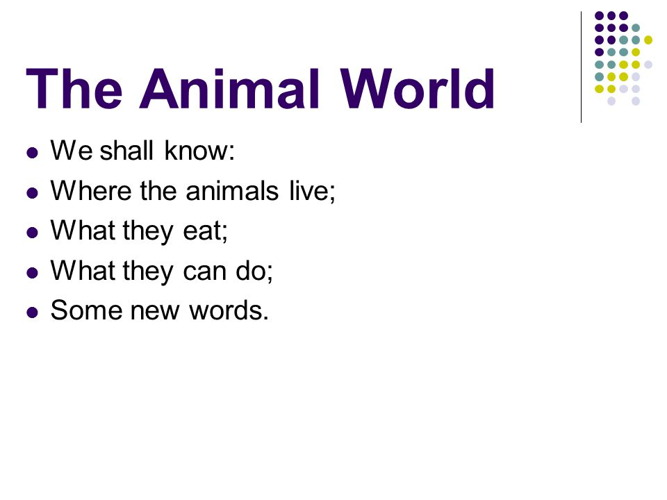 The Animal World We shall know: Where the animals live; What they eat; What they can do; Some new words.