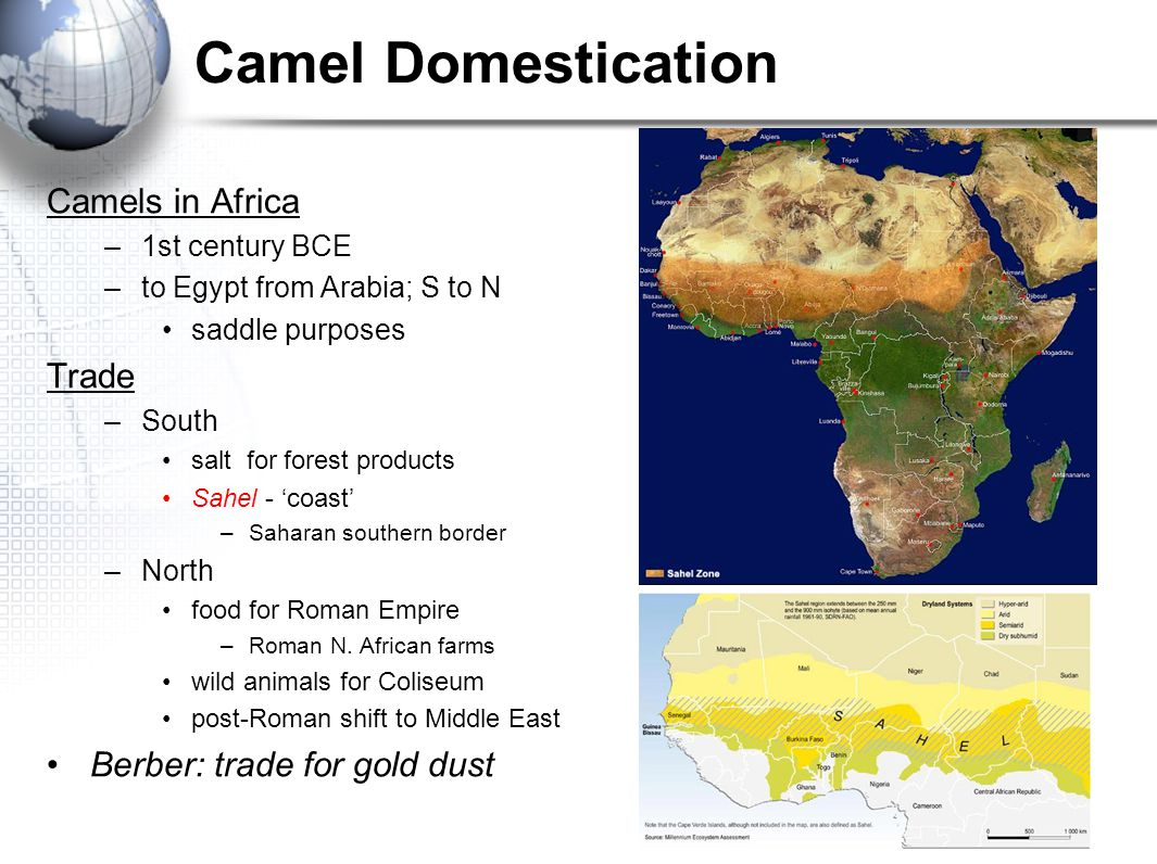 Camel Domestication Camels in Africa –1st century BCE –to Egypt from Arabia; S to N saddle purposes Trade –South salt for forest products Sahel - 'coa