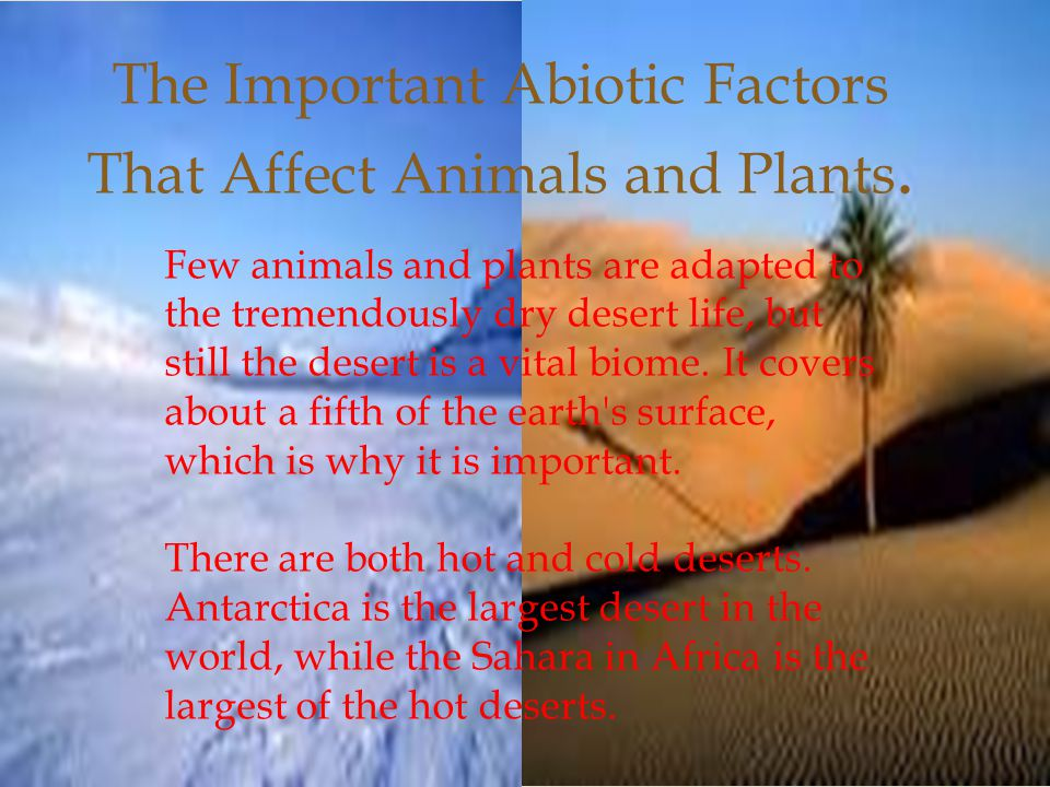 The Important Abiotic Factors That Affect Animals and Plants. Few animals and plants are adapted to the tremendously dry desert life, but still the de