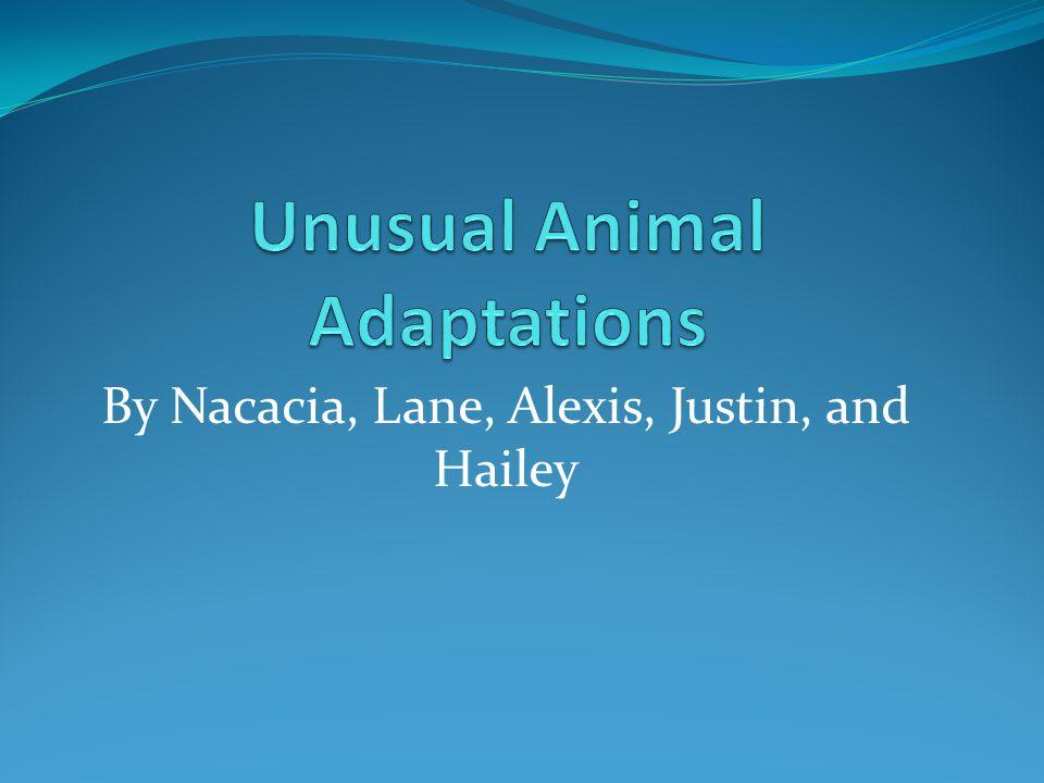 By Nacacia, Lane, Alexis, Justin, and Hailey