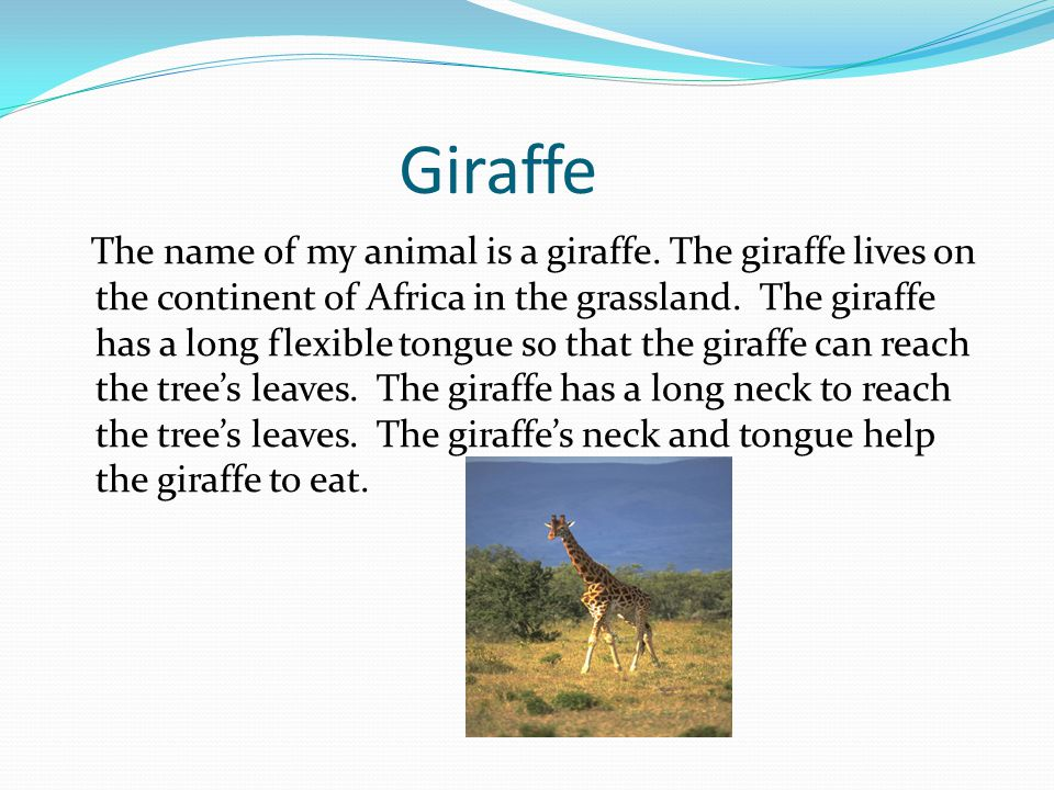 Giraffe The name of my animal is a giraffe.
