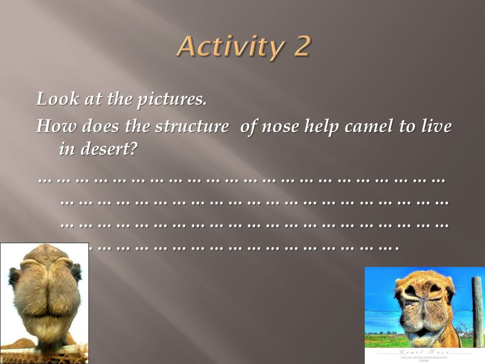 Look at the pictures.How does the structure of nose help camel to live in desert.