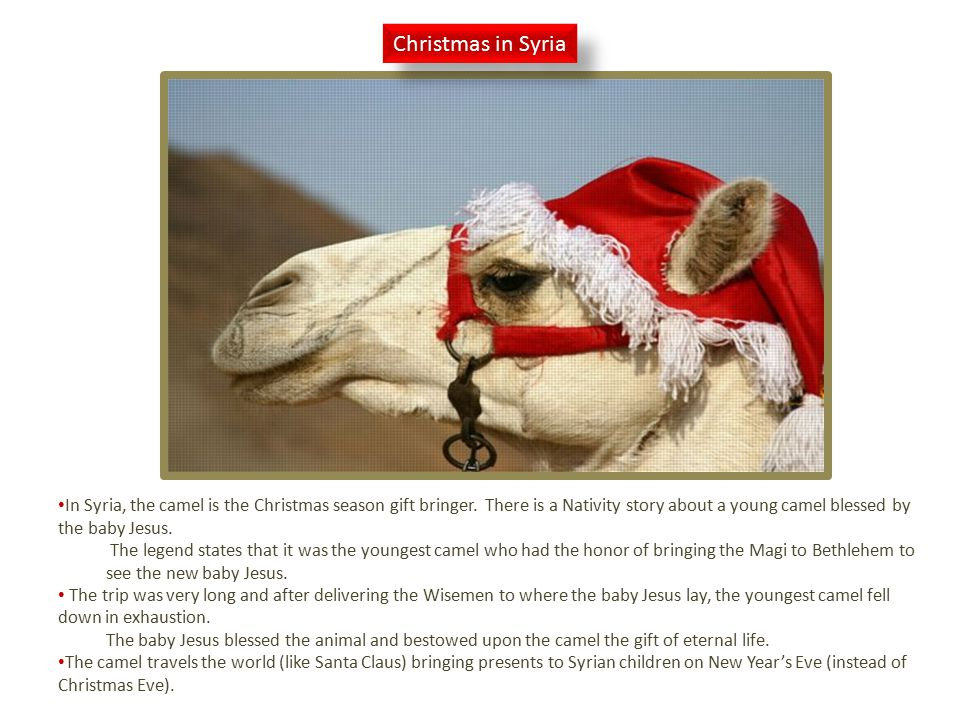 Christmas in Syria In Syria, the camel is the Christmas season gift bringer.