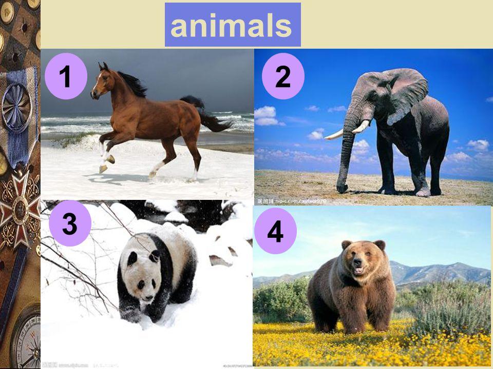 animals 12 4 3