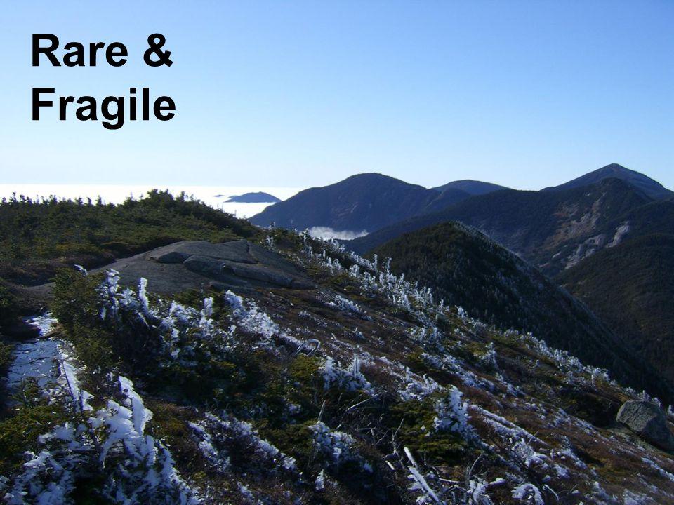 Rare & Fragile