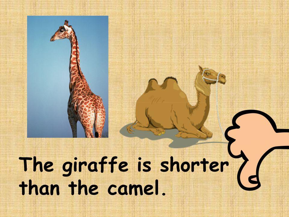 The giraffe is shorter than the camel.