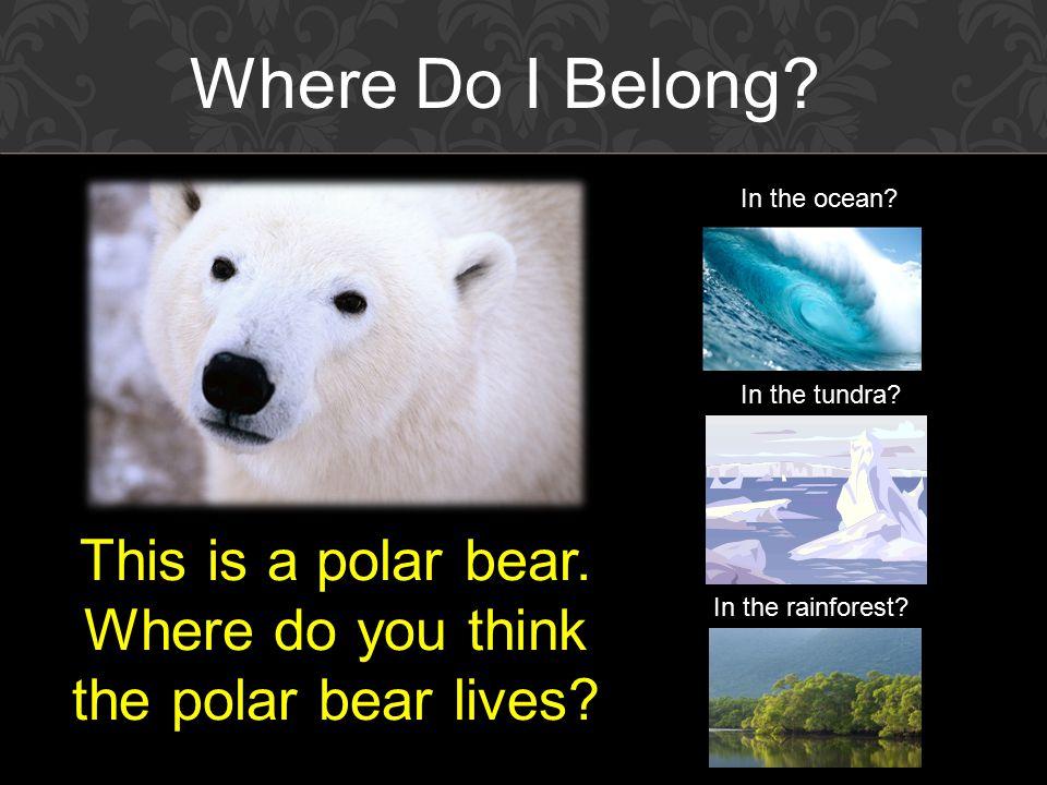 This is a polar bear. Where do you think the polar bear lives.
