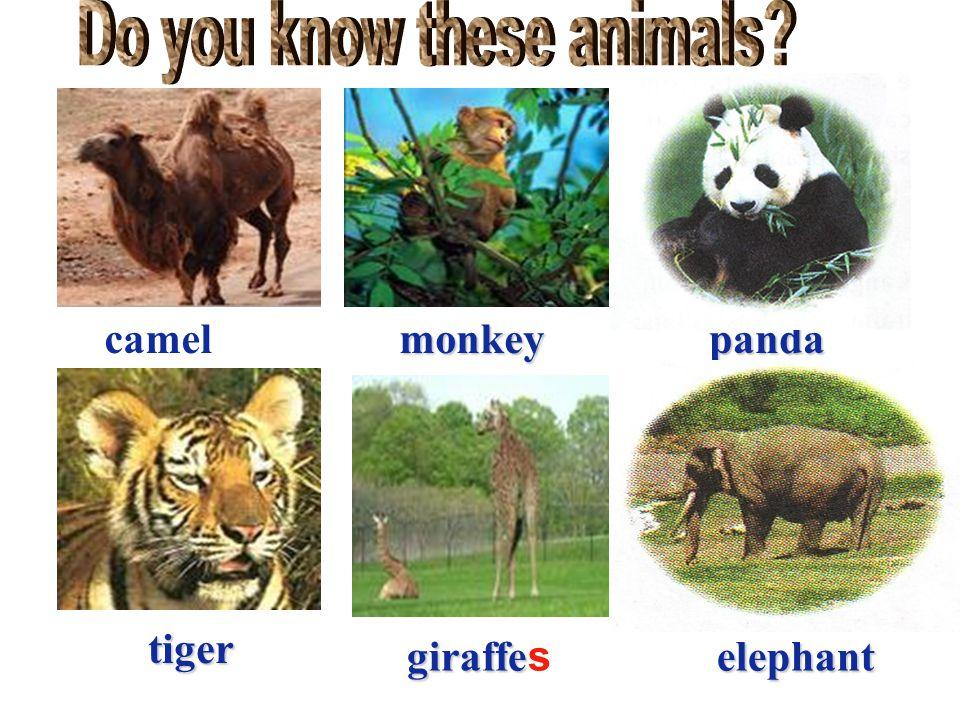 camelmonkeypanda tiger giraffeelephant s