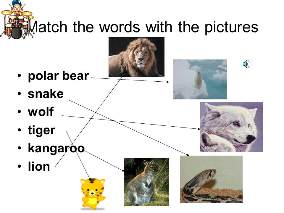 Match the words with the pictures polar bear snake wolf tiger kangaroo lion