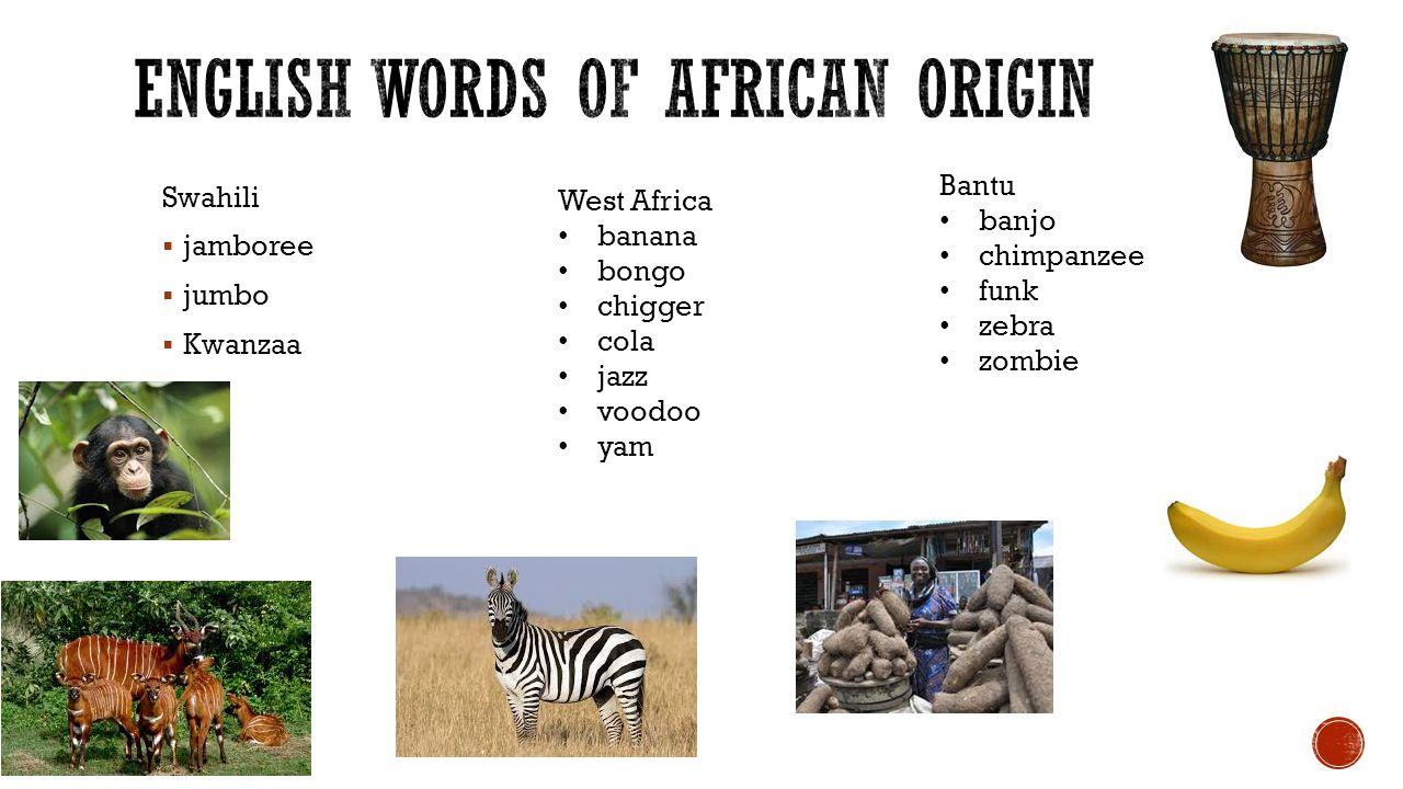 Swahili  jamboree  jumbo  Kwanzaa West Africa banana bongo chigger cola jazz voodoo yam Bantu banjo chimpanzee funk zebra zombie