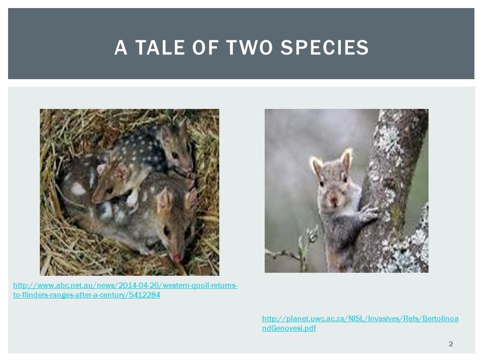 A TALE OF TWO SPECIES http://www.abc.net.au/news/2014-04-26/western-quoll-returns- to-flinders-ranges-after-a-century/5412284 http://planet.uwc.ac.za/