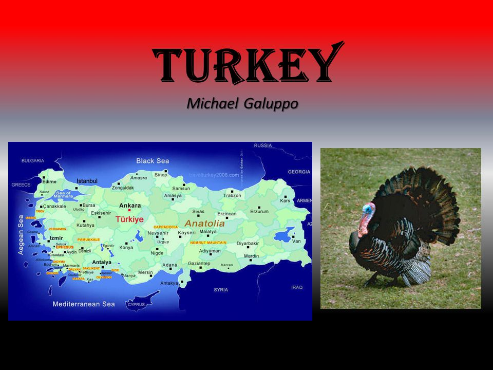 Turkey Michael Galuppo