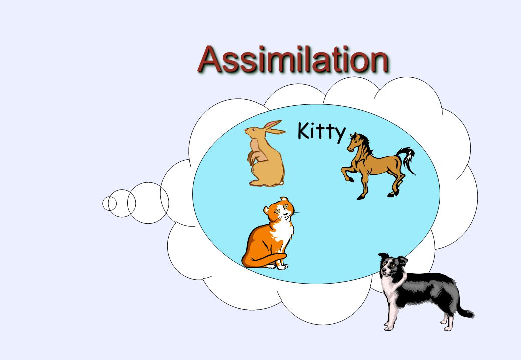 AssimilationAssimilation Kitty