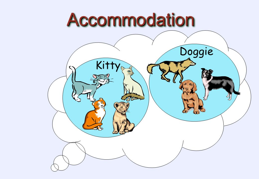 AccommodationAccommodation Doggie