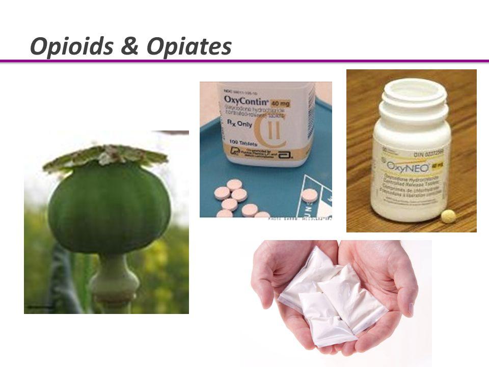 Opioids & Opiates