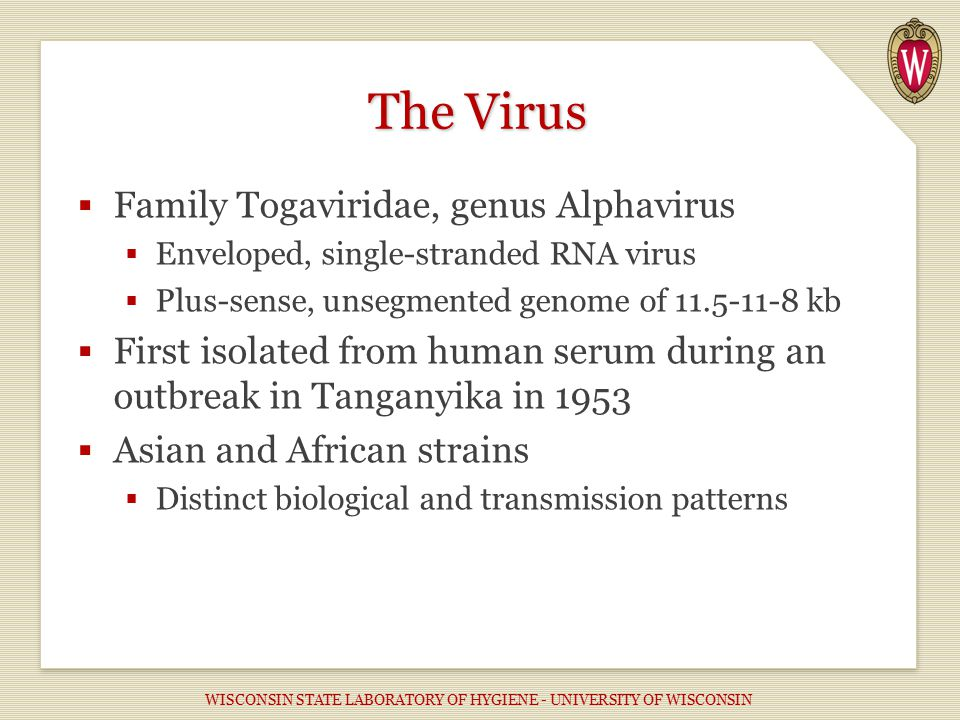  Family Togaviridae, genus Alphavirus  Enveloped, single-stranded RNA virus  Plus-sense, unsegmented genome of 11.5-11-8 kb  First isolated from human serum during an outbreak in Tanganyika in 1953  Asian and African strains  Distinct biological and transmission patterns The Virus WISCONSIN STATE LABORATORY OF HYGIENE - UNIVERSITY OF WISCONSIN
