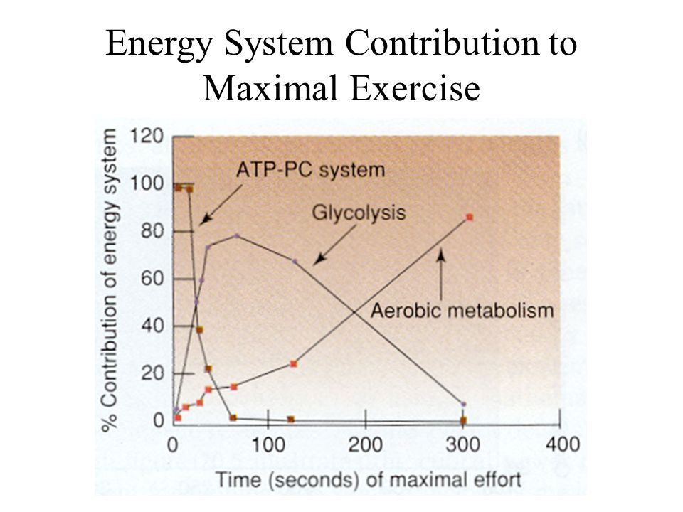 Energy System Contribution to Maximal Exercise