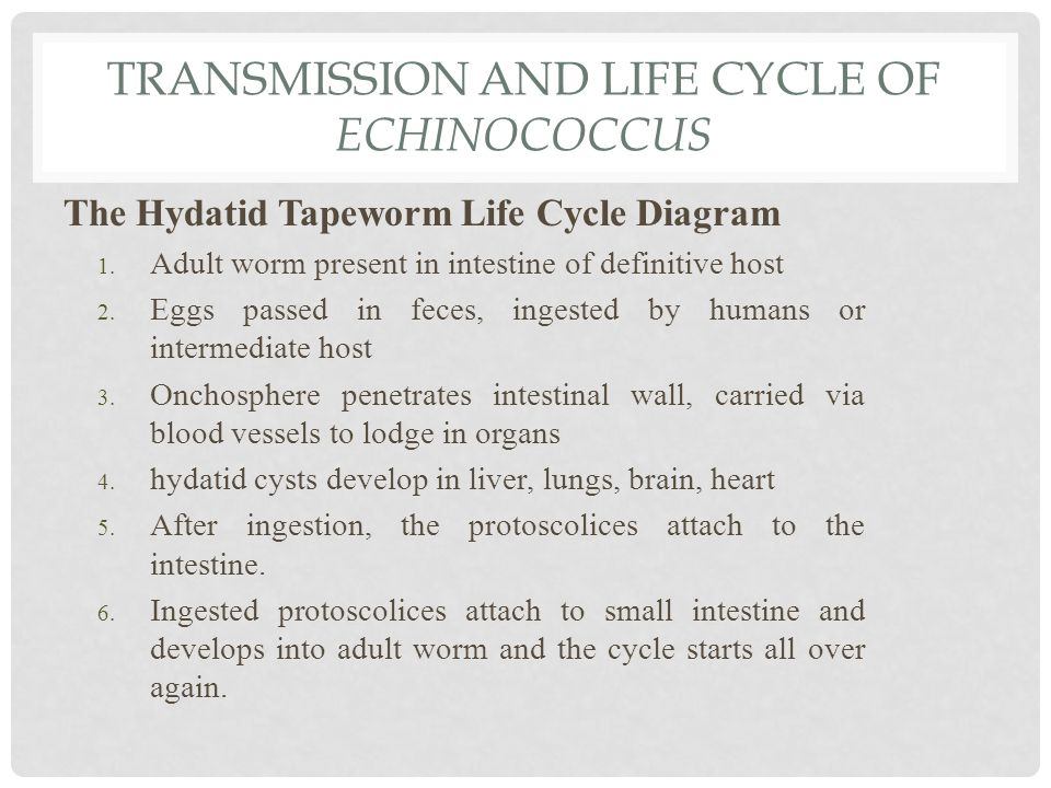 TRANSMISSION AND LIFE CYCLE OF ECHINOCOCCUS The Hydatid Tapeworm Life Cycle Diagram 1.