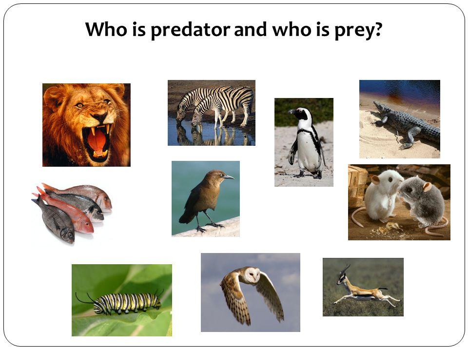 PREDATOR OR PREY? Or BOTH?