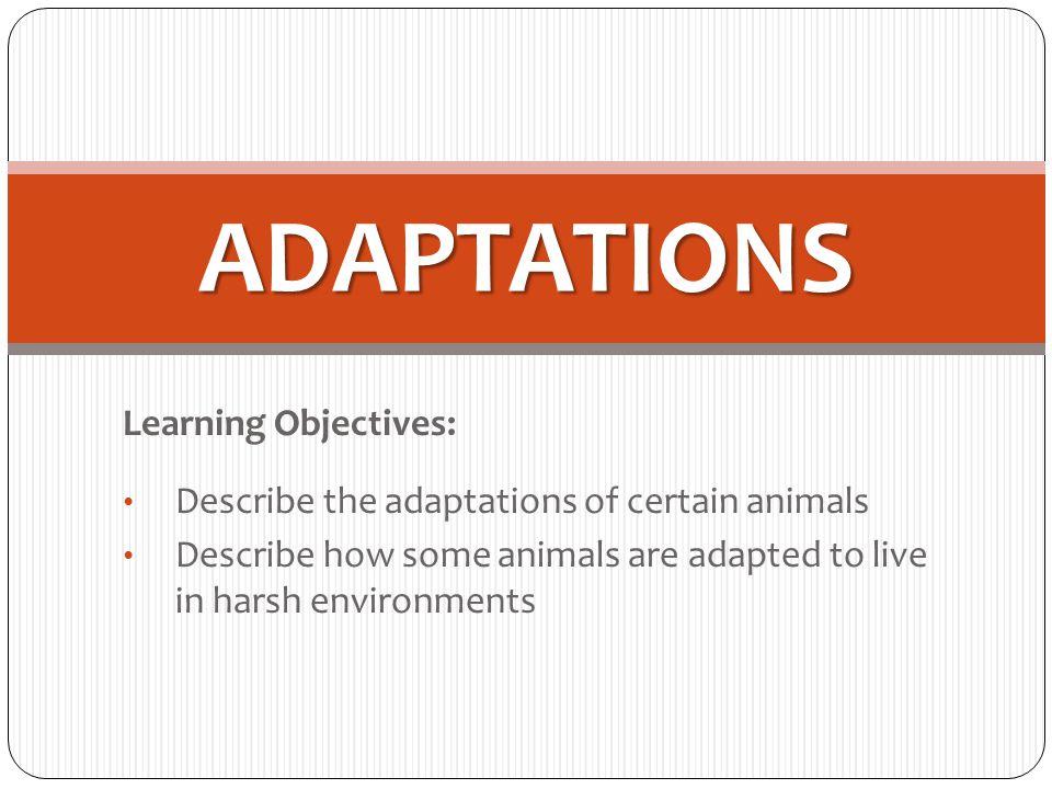 Predators and prey Write down what you think makes these animals good predators.
