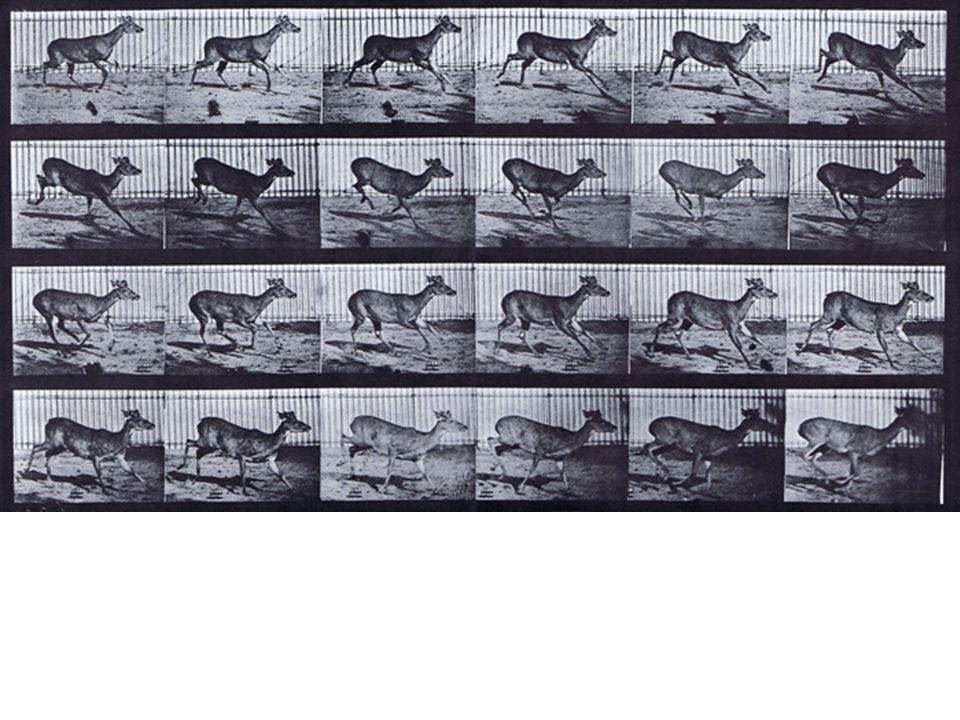 Deer – transverse gallop