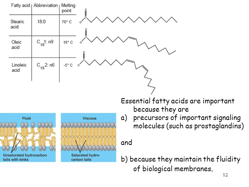 Essential fatty acids are important because they are a)precursors of important signaling molecules (such as prostaglandins) and b) because they maintain the fluidity of biological membranes.