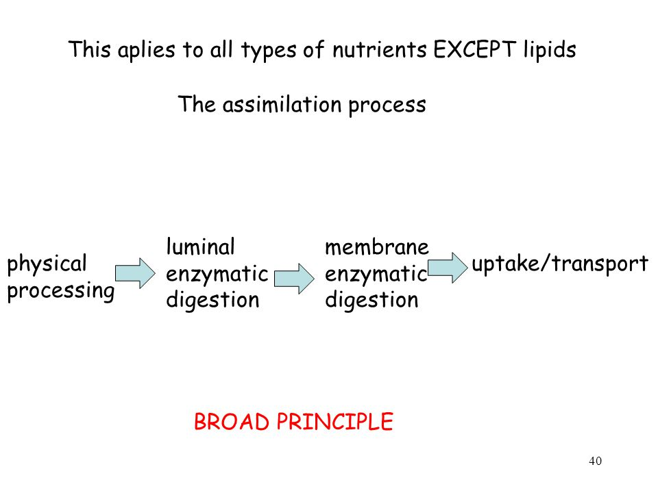 This aplies to all types of nutrients EXCEPT lipids The assimilation process physical processing luminal enzymatic digestion membrane enzymatic digestion uptake/transport BROAD PRINCIPLE 40