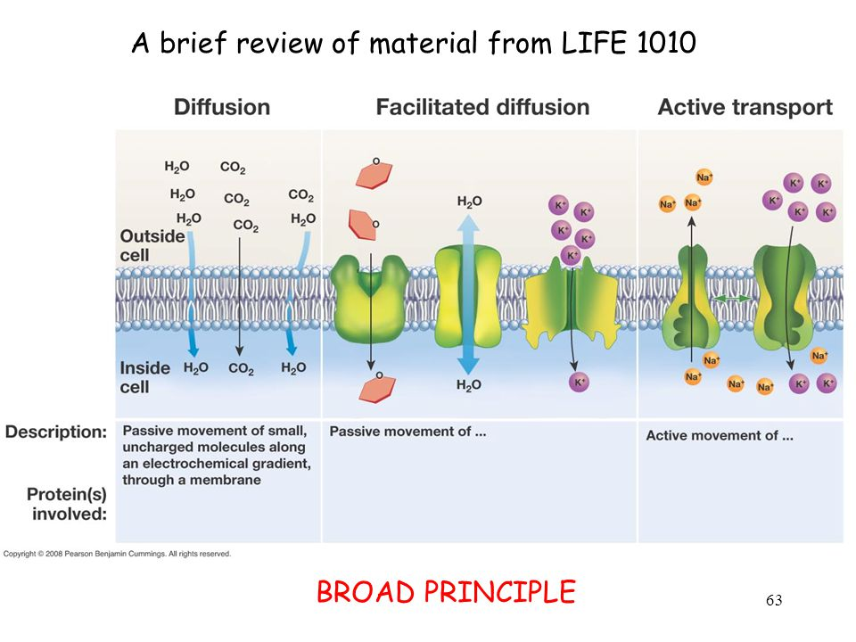 A brief review of material from LIFE 1010 BROAD PRINCIPLE 63