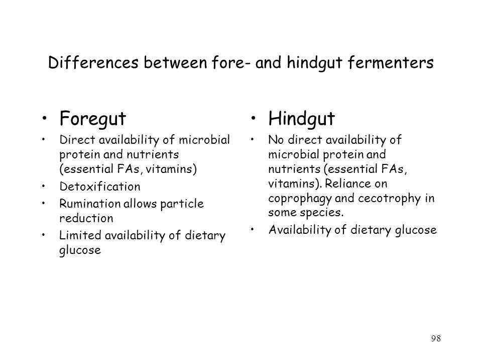 Differences between fore- and hindgut fermenters Foregut Direct availability of microbial protein and nutrients (essential FAs, vitamins) Detoxification Rumination allows particle reduction Limited availability of dietary glucose Hindgut No direct availability of microbial protein and nutrients (essential FAs, vitamins).