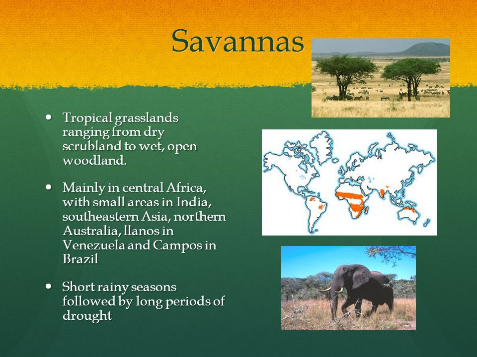 Savannas Tropical grasslands ranging from dry scrubland to wet, open woodland.