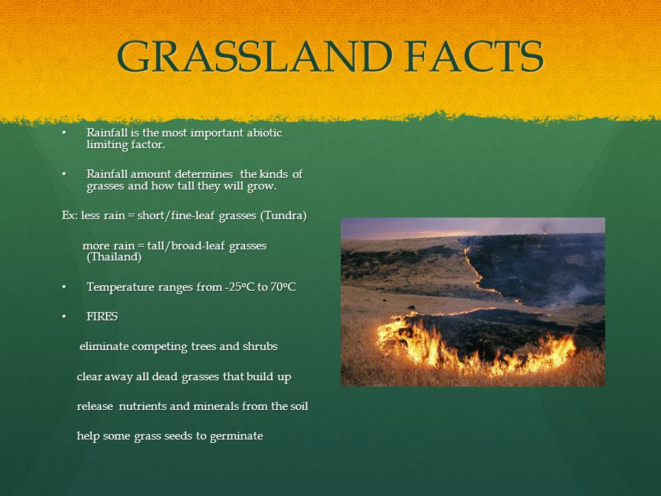 GRASSLAND FACTS Rainfall is the most important abiotic limiting factor.